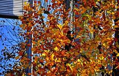 Ors, reflets et lumière. (Diegojack) Tags: vaud suisse morges d500 nikon nikonpassion automne couleurs saisons reflets façades vitres