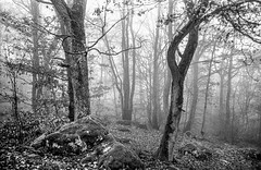 """Mystery-trees in the fog <a style=""""margin-left:10px; font-size:0.8em;"""" href=""""http://www.flickr.com/photos/25373742@N07/46214819912/"""" target=""""_blank"""">@flickr</a>"""