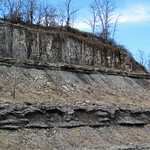 Slade Formation (Upper Mississippian; Route 519 Outcrop, south of Morehead, Kentucky, USA) 1 thumbnail