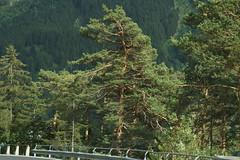 Gebogen. (limburgs_heksje) Tags: zwitserland schweiz swiss berner oberland alpen süstenpas