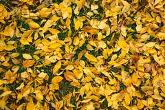 Green Bay Fall Colors-14