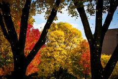 Green Bay Fall Colors-2