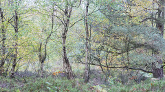 Woodland (RD400e) Tags: canon eos 5dsr ef 2470l f28 bwpolariser gitzo woods woodland trees tree autumn autumnal outdoors woodlandtrust britishwoodland walking yorkshire england