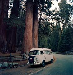 SL66.400NC.201810.12 (zampras) Tags: kokak portra 400nc rolleiflex sl66 504 distagon planar or sequoia national park