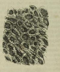 This image is taken from Page 368 of The microscope: and its revelations (Medical Heritage Library, Inc.) Tags: microscopy natural history wellcomelibrary ukmhl medicalheritagelibrary europeanlibraries date1856 idb28136974