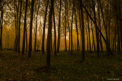 Imperfecto (AvideCai) Tags: avidecai paisaje bosque tamron2470 otoño arboles