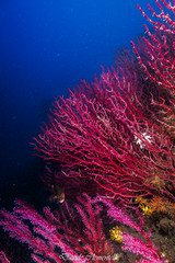 IMG_1305 (davide.clementelli) Tags: diving dive dives padi immersione immersioni ampportofino portofino liguria friends amici underwater underwaterlife sottacqua