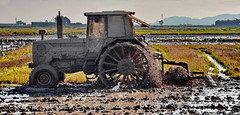 Ploughing a paddy field La Marjal (gerard eder) Tags: world travel reise viajes europa europe españa spain spanien valencia tractor albufera albuferalake landscape landschaft lake lago lagodelaalbufera landwirtschaft lamarjal paddy mud outdoor paisajes panorama agricultura agriculture
