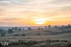 Sunrise at NP Veluwezoom (The Netherlands) (Renate van den Boom) Tags: 09september 2018 boom europa gelderland heide jaar landschap maand mist natuur nederland renatevandenboom veluwezoom weer zon zonsopkomst