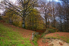 El sendero (pascual 53) Tags: otoño urbasa navarra canon 5ds 1635mm paseootoñal colores