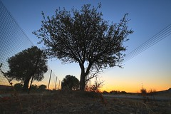 Sunset in Cyprus (6) (Polis Poliviou) Tags: nature green tree wood root agriculture plant outdoors cyprustheallyearroundisland cyprusinyourheart yearroundisland zypern republicofcyprus ©polispoliviou2018 polispoliviou polis poliviou πολυσ πολυβιου leaf field mediterranean oleaeuropaea sunsetincyprus flora grass environment healthy beauty afiap motherearth art agricultural soil texture rough postcard brunch grey brown season countryside organic ecology ecological winter lovecyprus autumn olivo ulivo sunlight light sun sunset sunrise fall