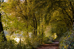 (Wöwwesch) Tags: autumn forest path alone walk fall silence light colors warm