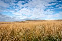 SJ1_2767 - Lancashire moorland (SWJuk) Tags: rossendale england unitedkingdom swjuk uk gb britain lancashire burnley home hills hillside moors moorland grasses sky skies bluesky clouds landscape countryside scenery 2018 oct2018 autumn autumnal autumncolours nikon d7200 nikond7200 nikkor1755mmf28 rawnef lightroomclassiccc