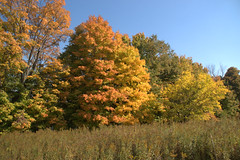 Maybury-State-Park-Fall-Colors_Northville-MI_10-07-2011n (Count_Strad) Tags: mayburystatepark maybury state park northville michigan mi fallcolor field
