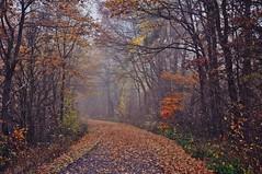 (Uli He - Fotofee) Tags: ulrike ulrikehe uli ulihe ulrikehergert hergert nikon nikond90 fotofee wald radweg herbst november blätter nebel nebelstimmung burghaun kegelspielradweg