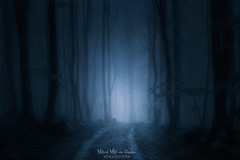 Path to the shadow (Mimadeo) Tags: scary dark fog night forest lost path fear horror mood monochrome landscape magic tree nightmare shadow light evening nature mystery mist spooky foggy darkness misty halloween woods evil creepy fantasy gothic mysterious surreal silhouette enchanted ghost atmosphere moonlight haunted eerie black blue moody atmospheric