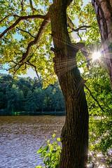 Autumn Sun (werbaer2) Tags: sonnenstern stmartin sunstar sunrails sun gegenlicht sonnenstrahlen tree baum water wasser see lake forrest wald palatine germany pfalz deutschland