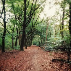 forest (Jos Mecklenfeld) Tags: forest wald bos nature natur natuur veluwe gelderland wageningen sonyxperiaz5 xperia