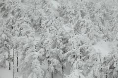 Juhyo (Elios.k) Tags: horizontal outdoors nopeople trees coveredinsnow juhyo snowmonster fir forest sky white ice hoarfrost frozen harshenvironment freezing cold zaosanchostation zaoropeway zaoskiresort snow winter weather mountain colour color travel travelling vacation december 2017 canon 5dmkii camera photography zao mountainzao mtzao zaoonsen zaōonsen mountzao skiresort yamagataprefecture tōhokuregion tohoku honsu asia japan