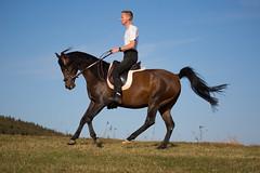 Basim_OS180370 (OliverSeitz) Tags: elbasim wachlarz elda arabian vollblutaraber pferd tier