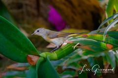 McKee-4 (Les Greenwood Photography) Tags: bird nature wildlife tree mckee florida