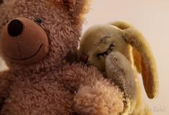 Love is ... (RickB500) Tags: portrait stilllife animals pair couple love rickb rickb500