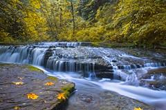 Sweet Creek Falls 1956 B (jim.choate59) Tags: jchoate on1pics sweetcreekfalls waterfalls oregon landscape autumn trees fallseason