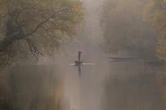 The Punt (ToDoe) Tags: punt stocherkahn fluss river neckar tübingen water wasser nebel fog trees weide trauerweide weepingwillow autumn herbst schwaden nebelschwaden boat kahn styx