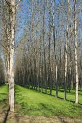 Le Langhe (beppeverge) Tags: acqua alberi beppeverge canale italianlandscape langhe paesaggioitaliano piedmont piemonte pioppi poplars water