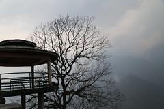 IMG_3994 (Beautiful Creation) Tags: india bagdogra darjeeling pelling yuksom gangtok lachen chopta valley lachung