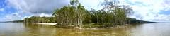 Elanda Point Kangaroo Mob (_honez) Tags: l wallaby camping noosahabitat habitat everglades fauna australia marsupial shore shoreline lazing lazy water queensland qld elandapoint panorama lake cootharaba mob kangaroo