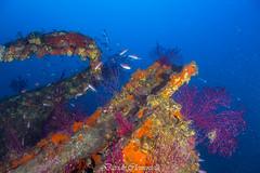 IMG_1390 (davide.clementelli) Tags: diving dive dives padi immersione immersioni ampportofino portofino liguria friends amici underwater underwaterlife sottacqua
