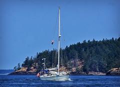 SAILIING THE ISLANDS (Wolf Creek Carl) Tags: sanjuanisland sailboats sail ocean water boat boating outdoors washington
