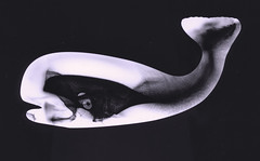 Ahab's Foe (ahpook12) Tags: whale ahab mobydick photogram toner glass kitsch michaelmendez fineart contemporary rayograph experimental