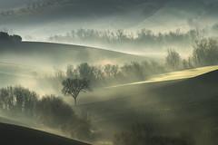 Particolari (Massimo Feliziani) Tags: paesaggio italiano marche italia italy italian landscape sunrise mist morning mattino campagna marchigiana marchigiano collina alba shadow ligth sun prato earth scenic hill amazing