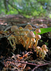 Family (♥ Annieta ) Tags: annieta september 2018 sony a6000 nederland netherlands drente zorgvlied herfst autumn bos wood paddenstoel mushroom toadstool champignon allrightsreserved usingthispicturewithoutpermissionisillegal