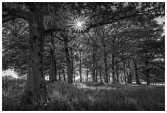 Sunday afternoon in the country (Wayne Interessiert's) Tags: sauerland landschaft landscape paysage monochrome bw blackwhite sonne soleil sun noirblancphoto bäume trees arbre wäldchen smallwood bosquet weide prairie saule wald forest forêt