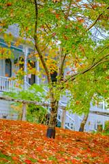 DSCF1670.jpg (RHMImages) Tags: trees fallcolors landscape macro fuji nevadacounty nevadacity xt3 fall fujifilm leaves