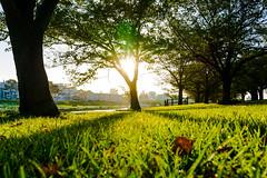 sunbeams (tokyobogue) Tags: tokyo japan akabane arakawa riverbank trees shadows sunset dusk goldenhour nikon nikond7100 d7100 sigma sigma1750mmexdcoshsm