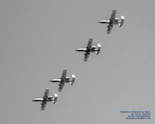 FOUR WARTHOGS IN TIGHT UP HIGH
