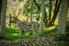 Deer Sculpture (Sean O'Hare) Tags: deer sculpture irish national stud gardens