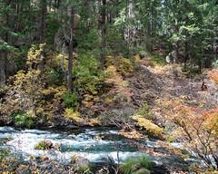 Stream_119992 (gpferd) Tags: plant stream tree water burney california unitedstates us