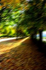 An Alley In Fall (ericgrhs) Tags: fall autumn herbst allee alley park trees bäume berlin schlossparkcharlottenburg laub nature