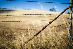 2018-06-02 Barbed Wire Chico_04 (goDonato) Tags: barbedwire chico grass field ca california rural blue sky