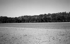f3 rr80s030 (salparadise666) Tags: nikon f3 series e 35mm rollei retro 80s boxspeed caffenol rs 15min nils volkmer nature landscape contrast lower saxony germany autumn