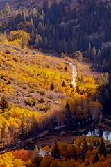 Lundy Canyon road (FranksValli) Tags: 2018 aspentrees autumn autumncolors beauty california colorful countryroads dirtroad easternsierra fall fallcolors forest landscape leaves lundycanyon mountains natural october outdoor photography road scenery season tranquil trees wood yellow