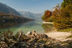 Slovenia Lake Bohinj. (daveknight1946) Tags: slovenia autumn lake lakebohinj water trees treestumps mountains alpe julianalpe greatphotographers