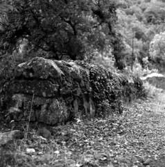 wall (salparadise666) Tags: mamiya c330 sekor 80mm orange filter fomapan 10064 caffenol rs 15min nils volkmer vintage tlr medium format 6x6 analogue film camera square detail landscape countryside france ardeche region cevennes bw black white monochrome