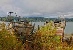 8496_Story Tellers (lg evans Maritime Images) Tags: maritimeimages ©lgevans lgevans lge decay boats derelict beached pugetsound wooden boat water sky trees bushes weeds reclaimed