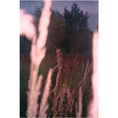 Last to sleep. (laserdazed) Tags: analogue 35mm expiredfilm filmisnotdead istillshootfilm